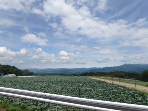 麦草峠への道(4)